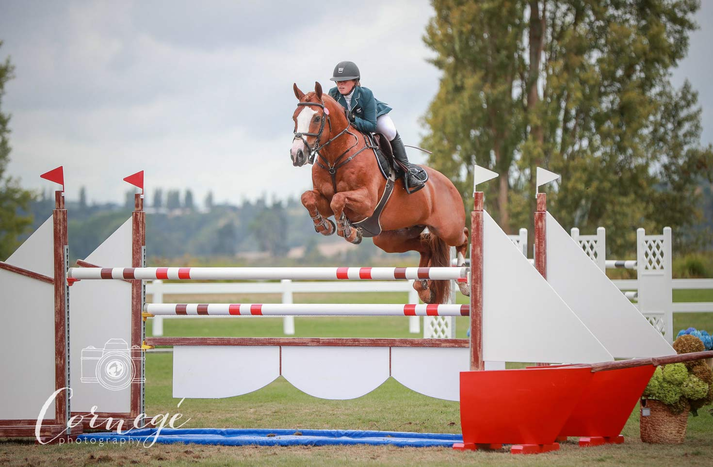 2018/19 Season Wrap-Up – Equibreed Leading NZ Jumping Stallion