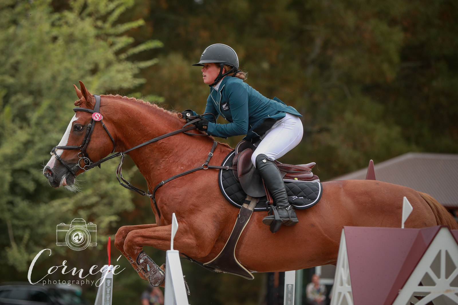 902 Gold Tour Qualifier One Takapoto Show Jumping Week One - Feb 2019 Photos by: Christine Cornege/ Cornege Photography
